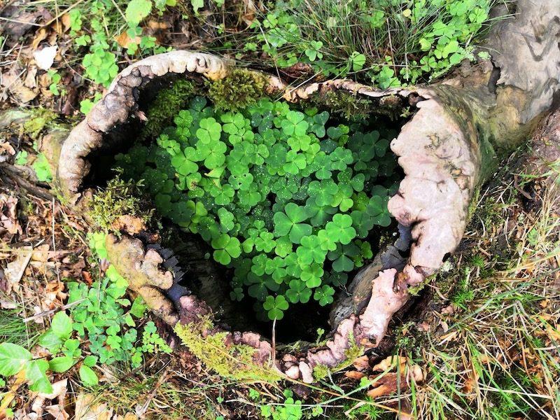Vom denkenden Verstand ins liebende Herz